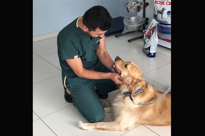 Kedi ve Köpek Sağlığı